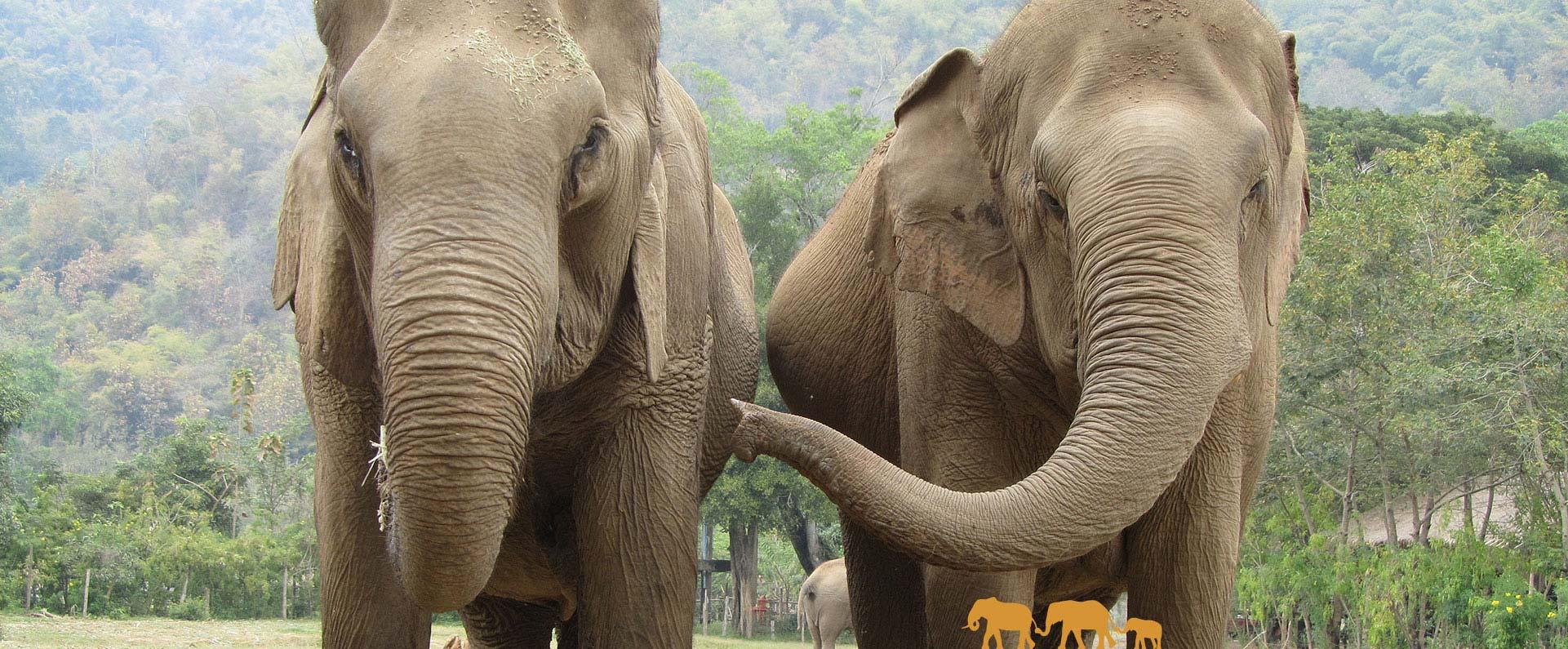 Elephant haven european elephant sanctuary - Image elephant ...